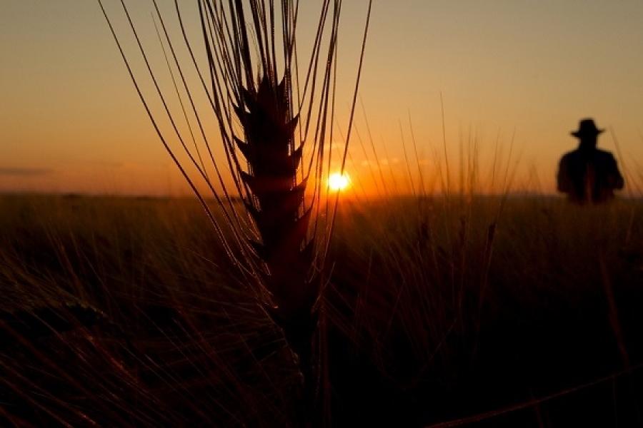 Успешното земеделие на България - 12